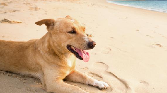 Les plus chouettes plages autorisées aux chiens en Belgique